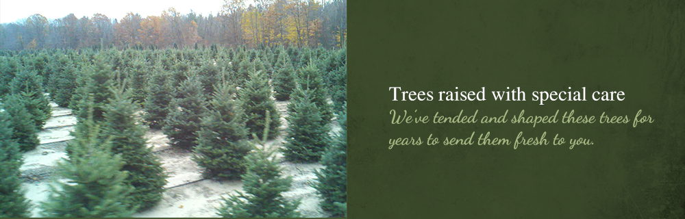 Trees Raised With Special Care