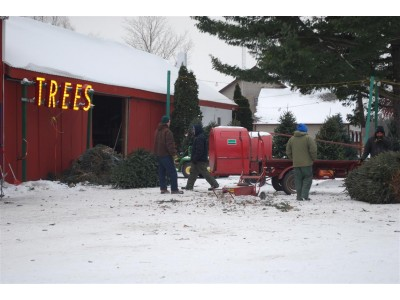 Live Christmas Wreaths for Sale