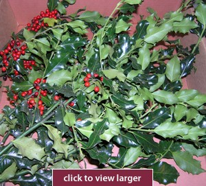 Green Holly & Berries