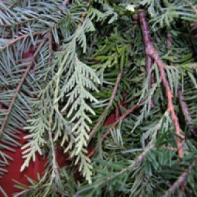 Balsam Fir and Cedar Garland