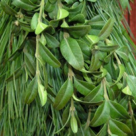 Boxwood Pine Garland