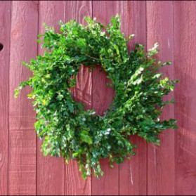 Boxwood Christmas Wreath