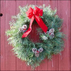 Concolor Fir Christmas Wreath