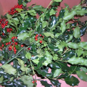 Green Holly and Berries