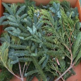 Holiday Sampler Cut Greens