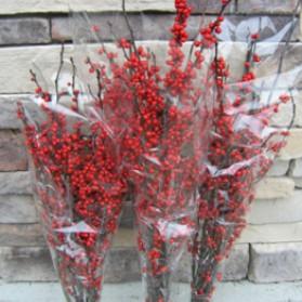 Winterberry Stems